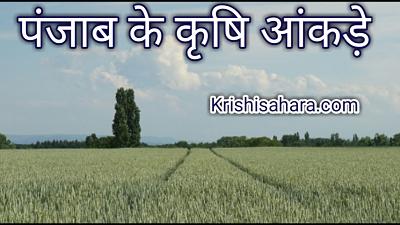 पंजाब-की-कृषि