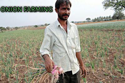 प्याज-की-खेती