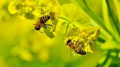 मधुमक्खी-पालन