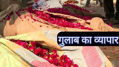 गुलाब-की-खेती