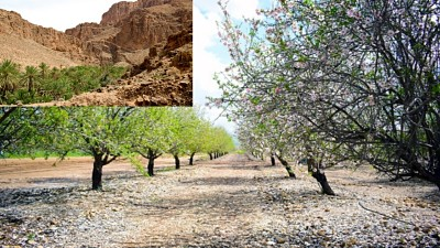 इजरायल-खेती