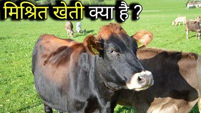 खेती-के-प्रकार मिश्रित खेती क्या है   कृषि के प्रकार   खेती   कृषि के प्रकार pdf  कृषि खेती के प्रकार   खेती किसे कहते है इसकी परिभाषा एवं खेती के प्रकार   भारत में कृषि के ये हैं प्रचलित तरीके, देश भर के किसान करते हैं   खेती के विभिन्न प्रकार   भारत में खेती के विभिन्न प्रकार   खेती की परिभाषा  कृषि के दो मुख्य प्रकार कौन से हैं   कृषि प्रणाली के प्रकार   खेती से लाभ और नुकसान   मिश्रित खेती क्या है   सामान्य खेती क्या है   मिश्रित खेती क्या है What is mixed farming   विशिष्ट खेती क्या है What is specific farming   बहुप्रकारीय खेती क्या है What is multifamily farming  कृषि के प्रकार   सामान्य खेती क्या है?   मिश्रित खेती के लाभ  